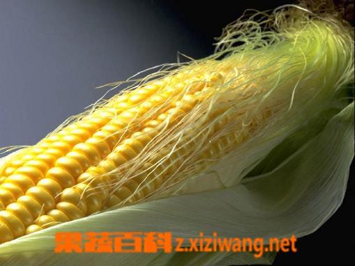 果蔬百科玉米须的药用价值